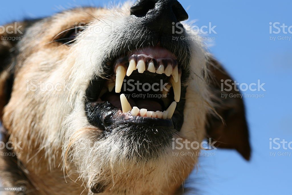 fangs of fury stock photo