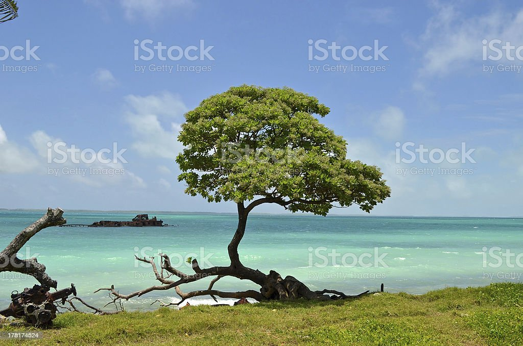 Fanning Island Tree and Shipwreck stock photo
