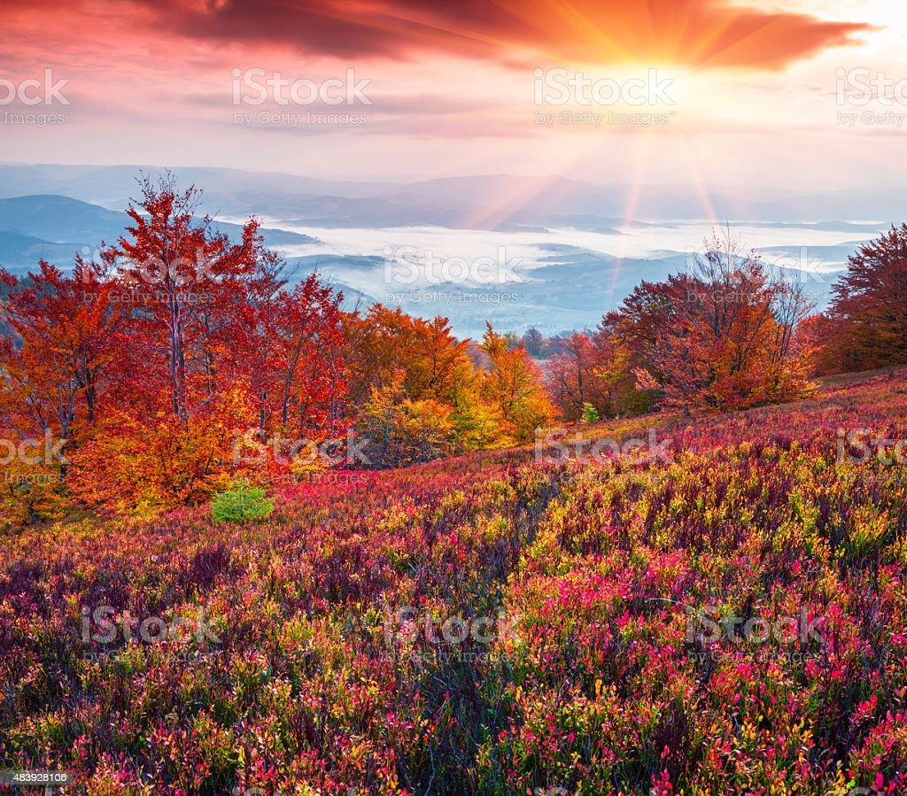 Fantastic colors autumn landscape in the Carpathian mountains. stock photo