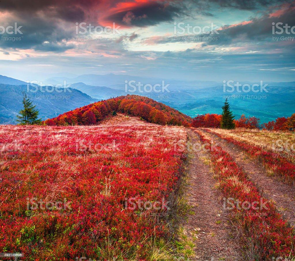 Fantastic colors autumn landscape in the Carpathian mountains stock photo