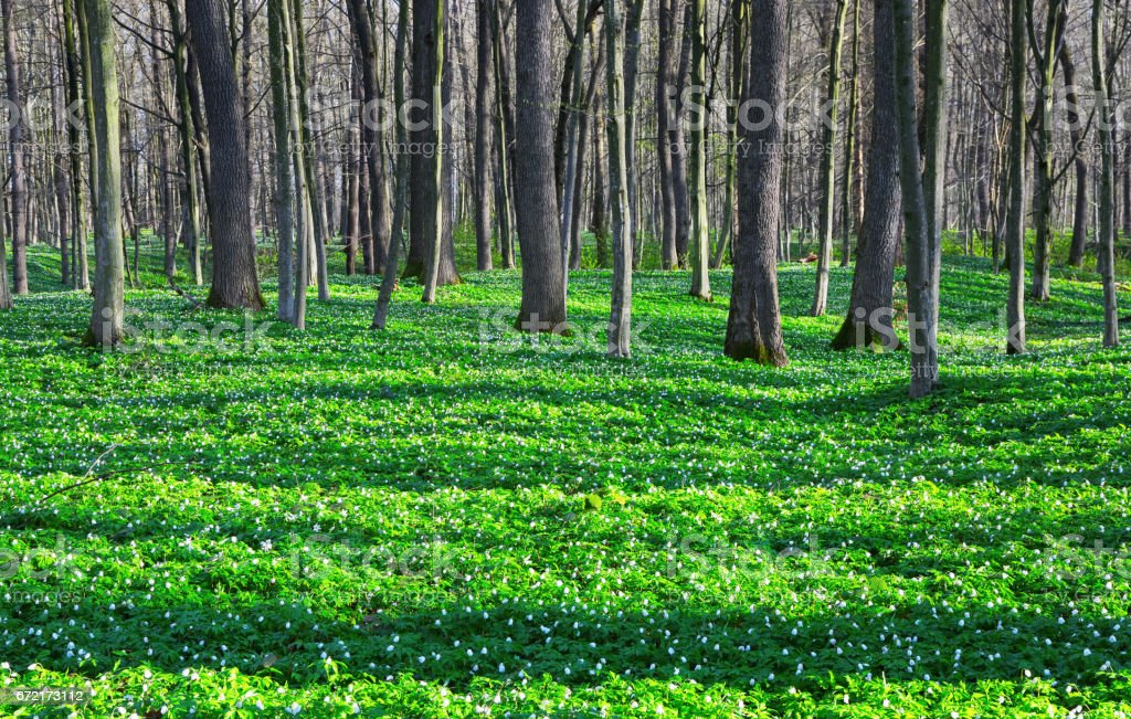 Fantastic fascinating tree shadows cover the lawn with bright green grass and flowers as beads. stock photo