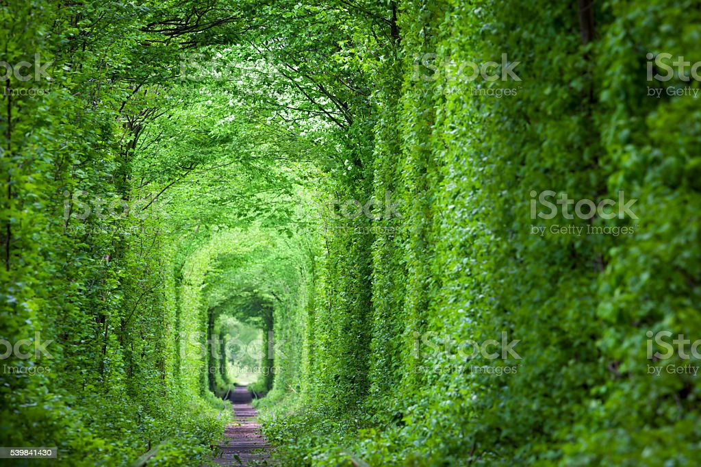Fantastic Real Tunnel of Love, green trees and the railroad stock photo