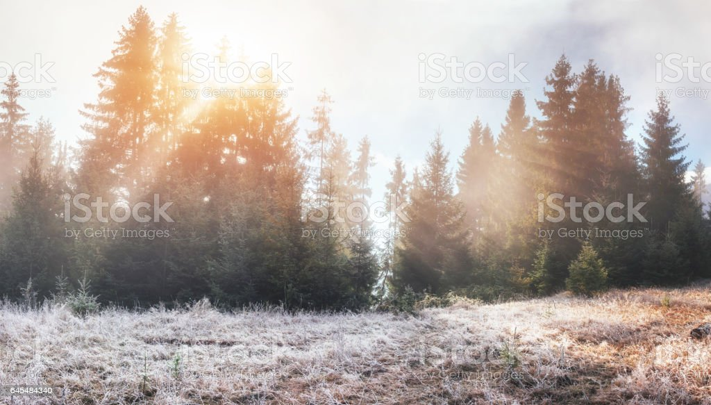 Fantastic sunlight in the morning.  fog in the mountain stock photo