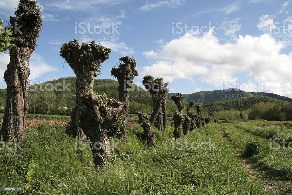 Fantastic trees royalty-free stock photo