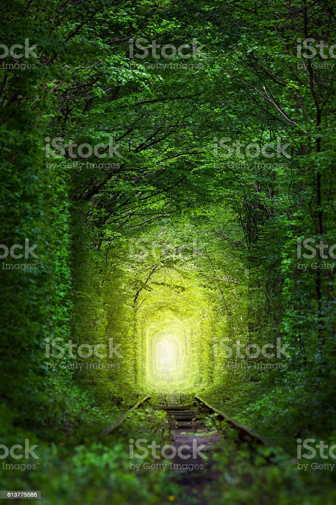 Fantastic Trees - Tunnel of Love with fairy light stock photo