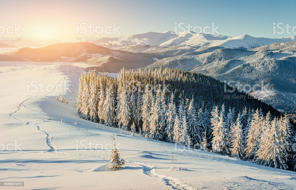 Fantastic winter landscape and trampled paths at sunset that lea stock photo