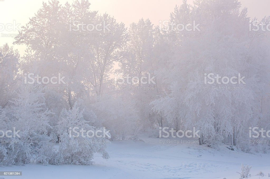 Fantastic winter landscape. Frozen trees in forest. Beauty world royalty-free stock photo