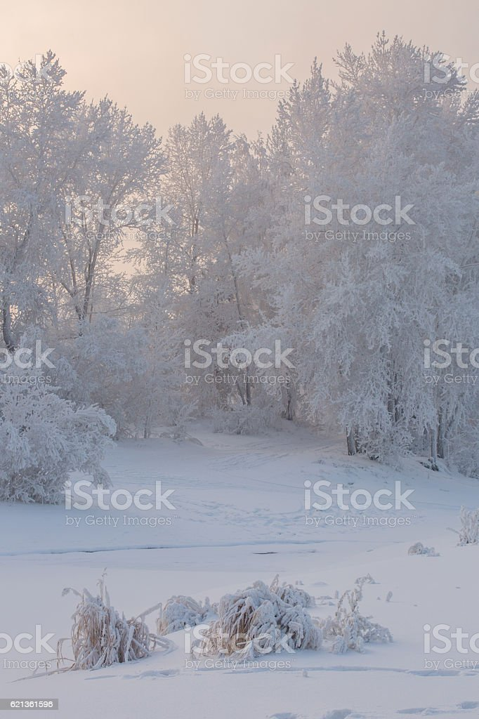 Fantastic winter landscape. Frozen trees in forest royalty-free stock photo