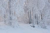 Fantastic winter landscape. Frozen trees in forest