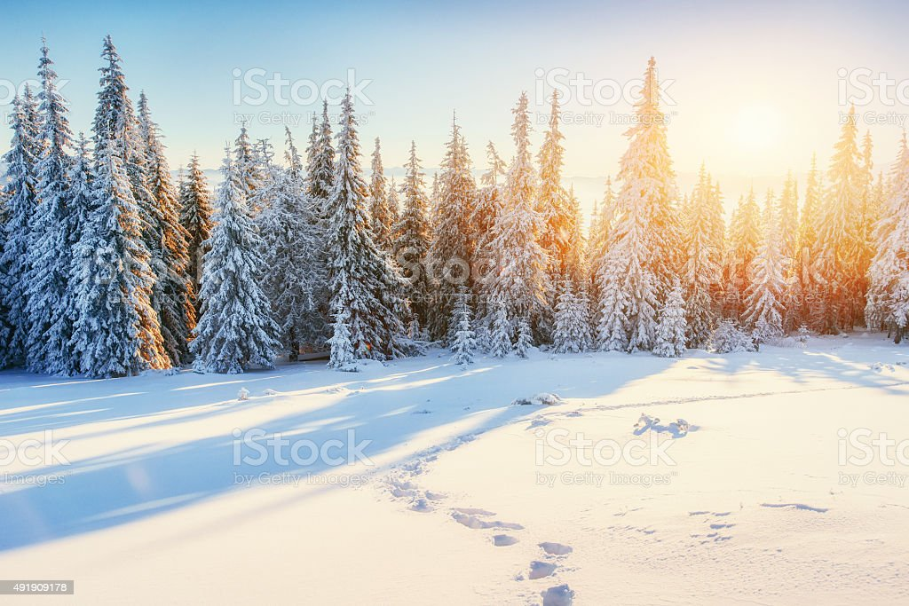 Fantastic winter landscape in the mountains of Ukraine stock photo