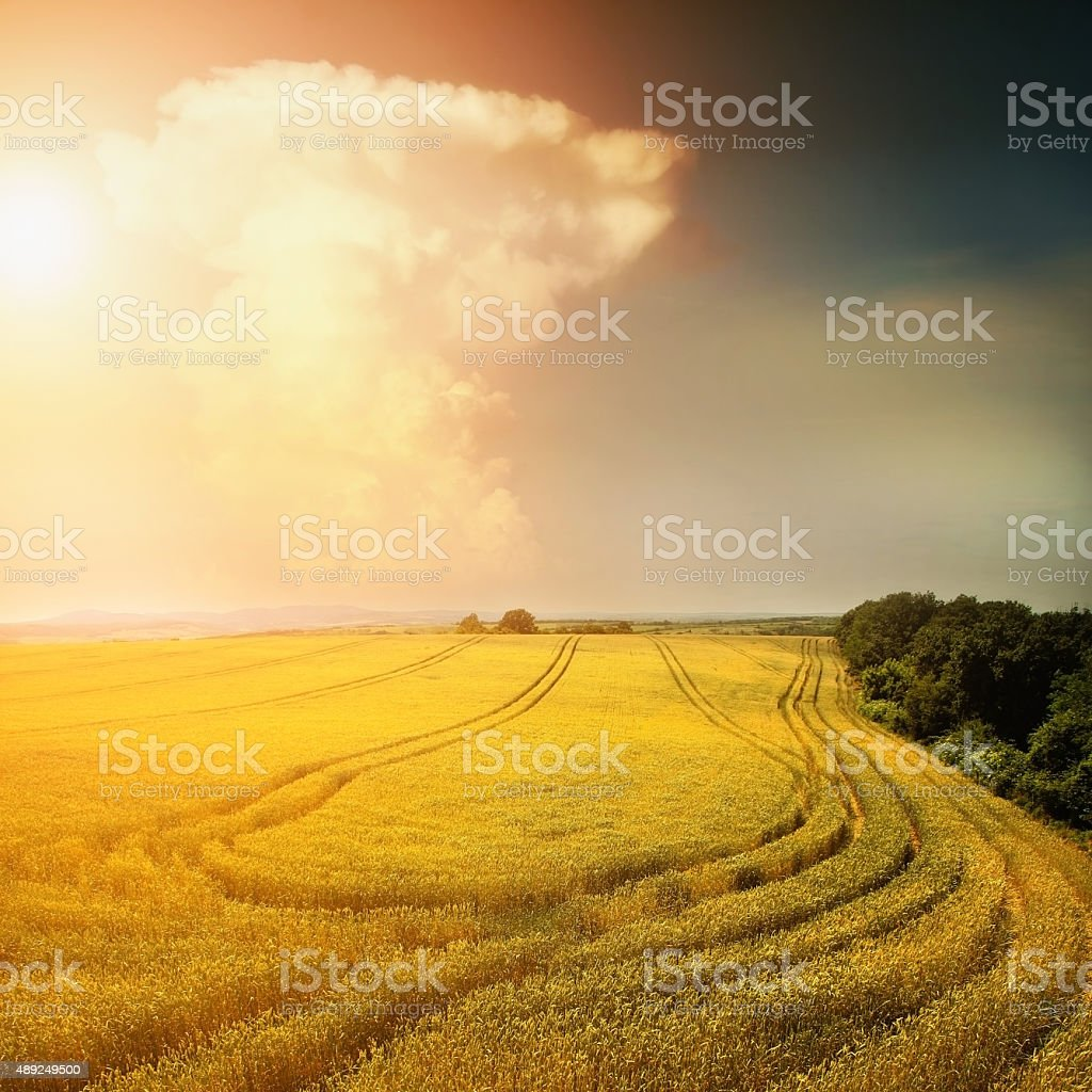 Fantasy landscape with high clouds and barley field stock photo