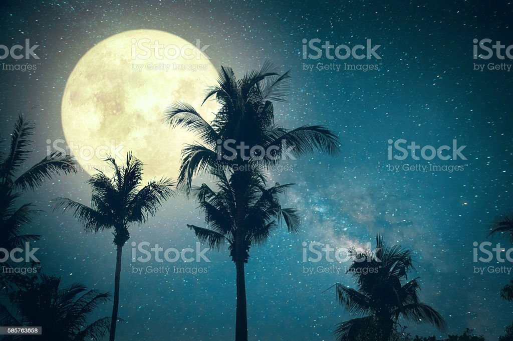 fantasy palm tree stock photo
