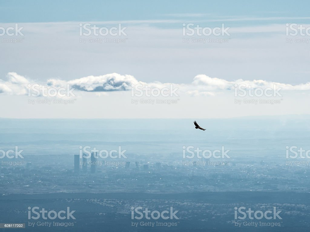Far aerial view of Madrid city with a vulture flying stock photo