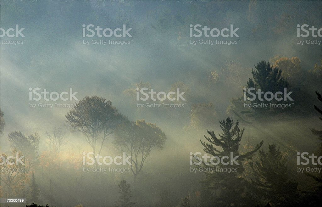 Faraway Forest stock photo