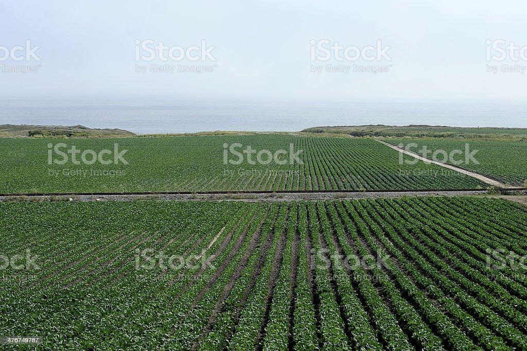 Farm Along Highway 1 California royalty-free stock photo