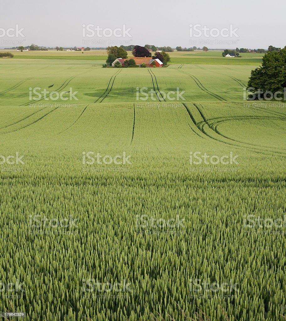 Farm among fields stock photo