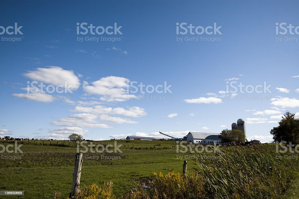 Farm and cows royalty-free stock photo