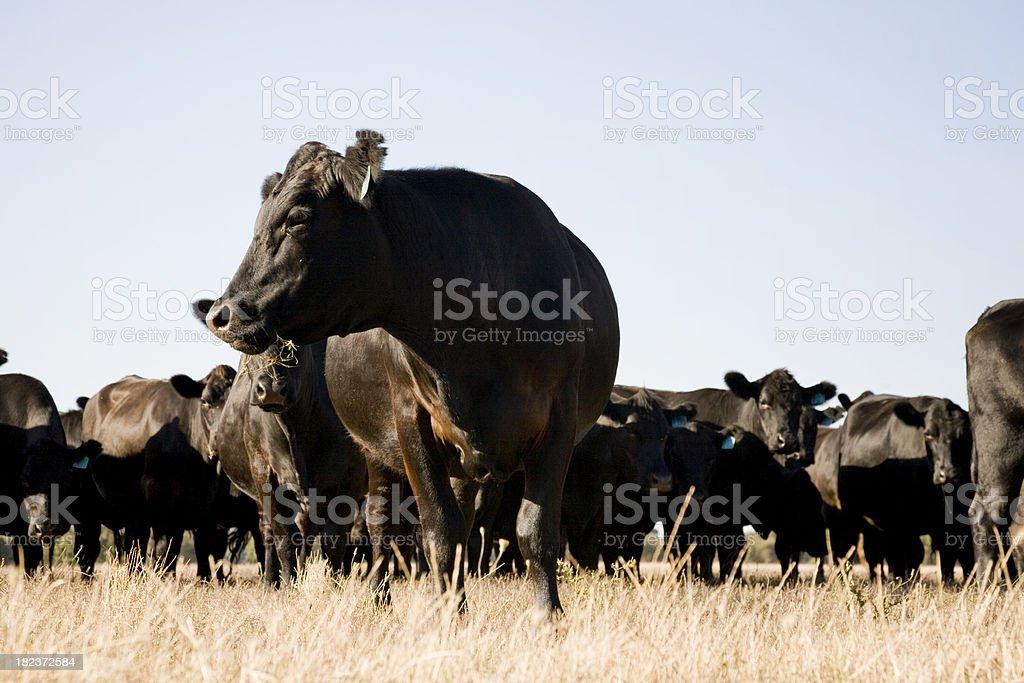 Farm Animals stock photo