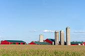 Farm Barns and Silo's Across Corn Field