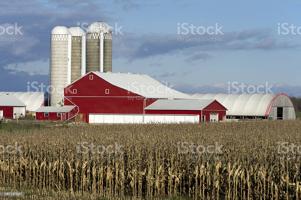 Farm Barns and Silo's in Fall royalty-free stock photo