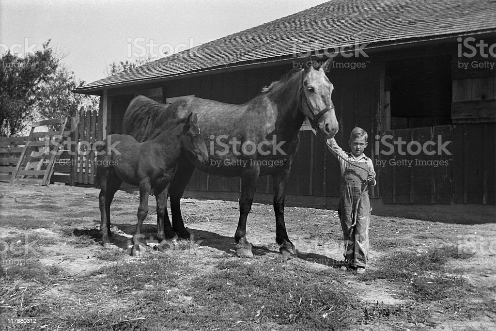 farm boy with mare and foal in barnyard 1935, retro royalty-free stock photo