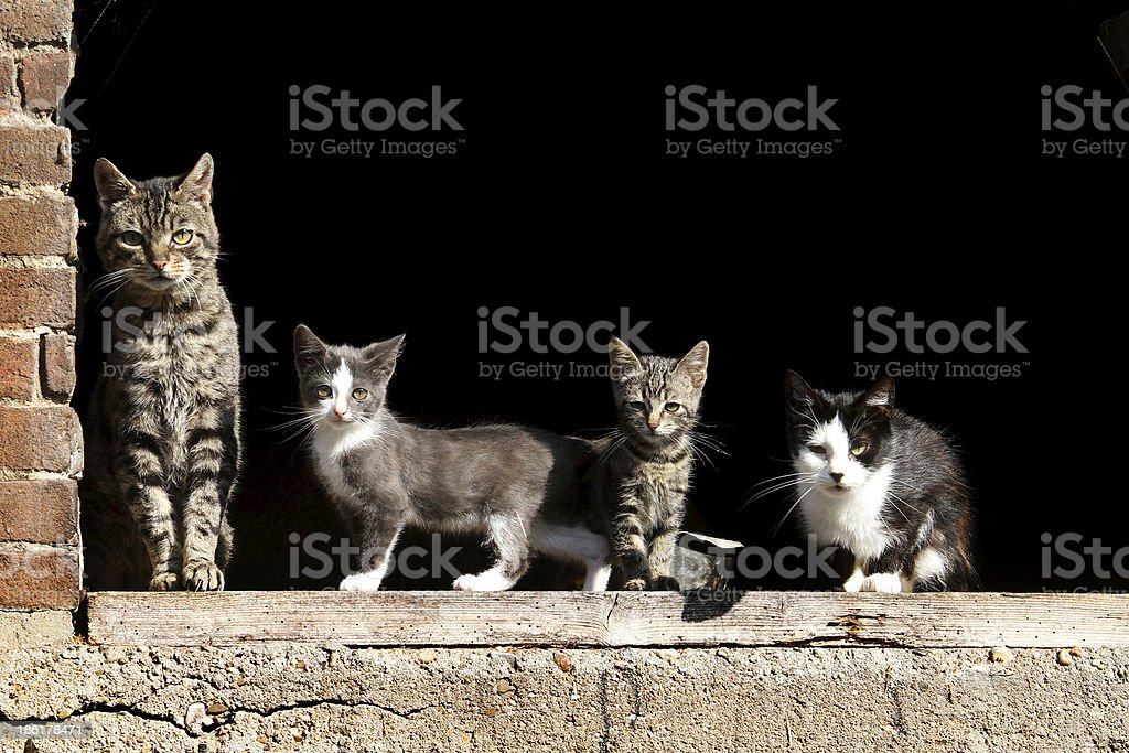 Farm cats in a line stock photo