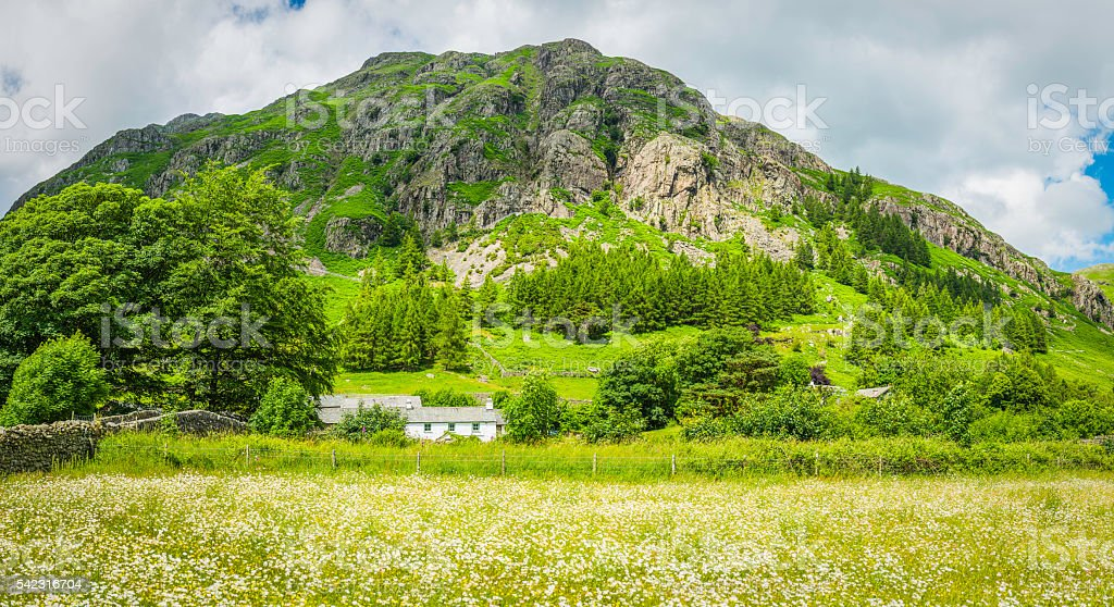 Farm cottages nestled in green daisy meadows below mountain Cumbria stock photo