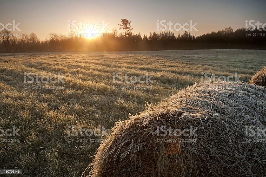 Farm Dawn stock photo