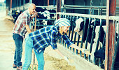 Farm employees in livestock barn