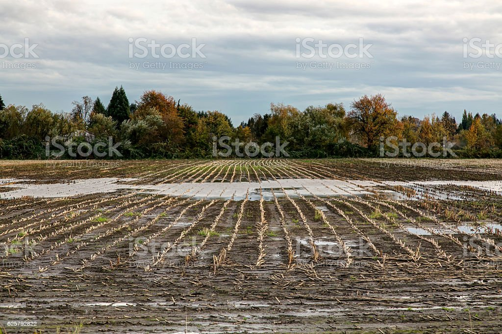 farm field after harvest stock photo
