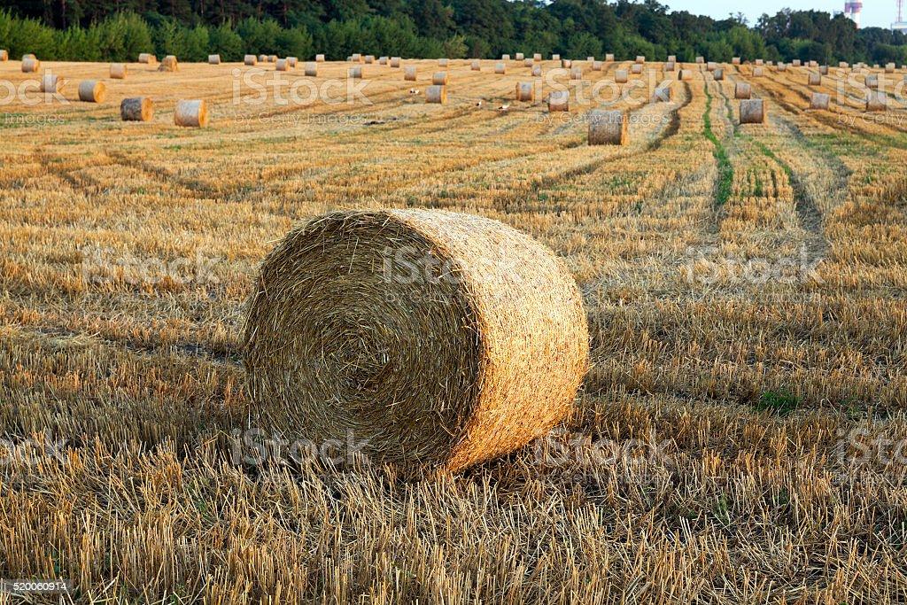 farm field cereals stock photo