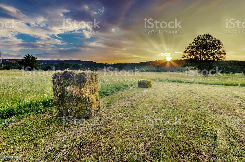 farm field in the countryside filled with straw bales stock photo