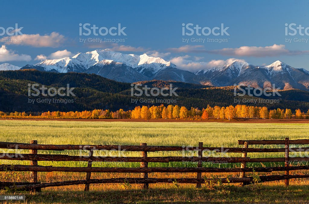 Farm field of cereals with fence stock photo