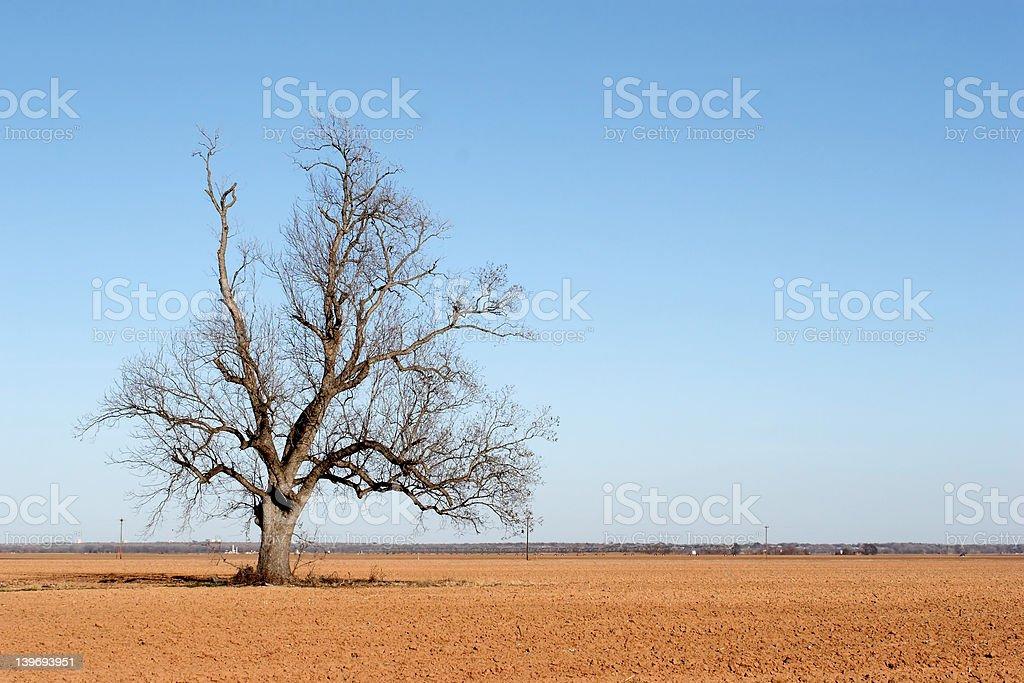 Farm Field royalty-free stock photo