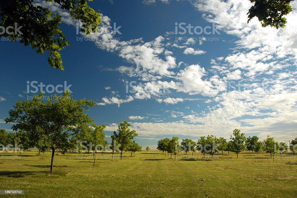Farm field (4) royalty-free stock photo