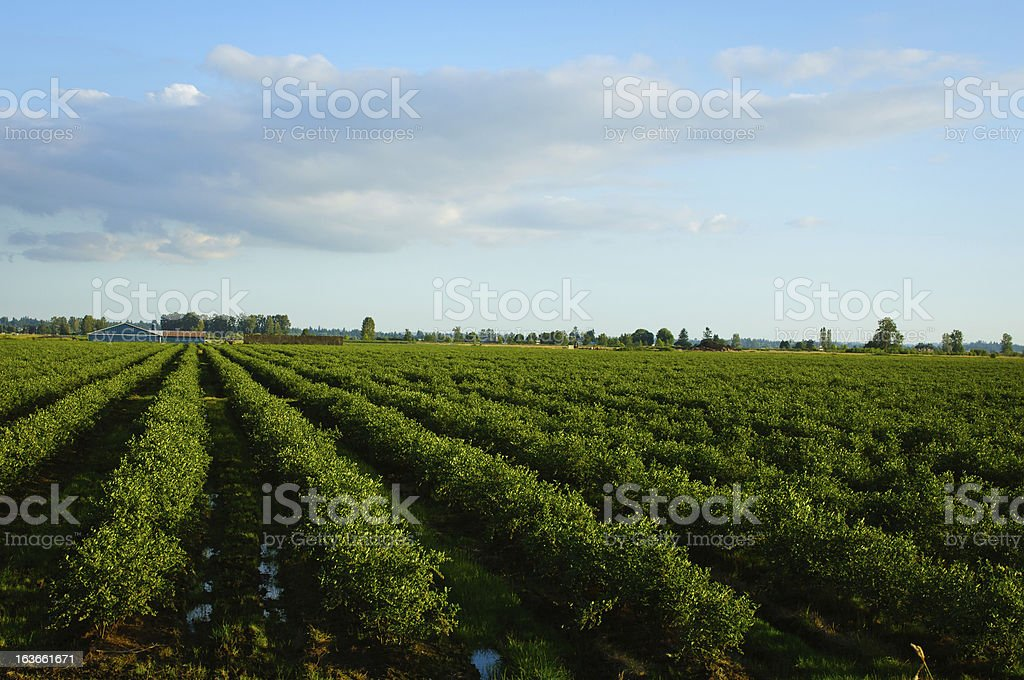 Farm field stock photo