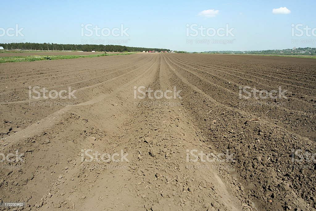 Farm field. royalty-free stock photo