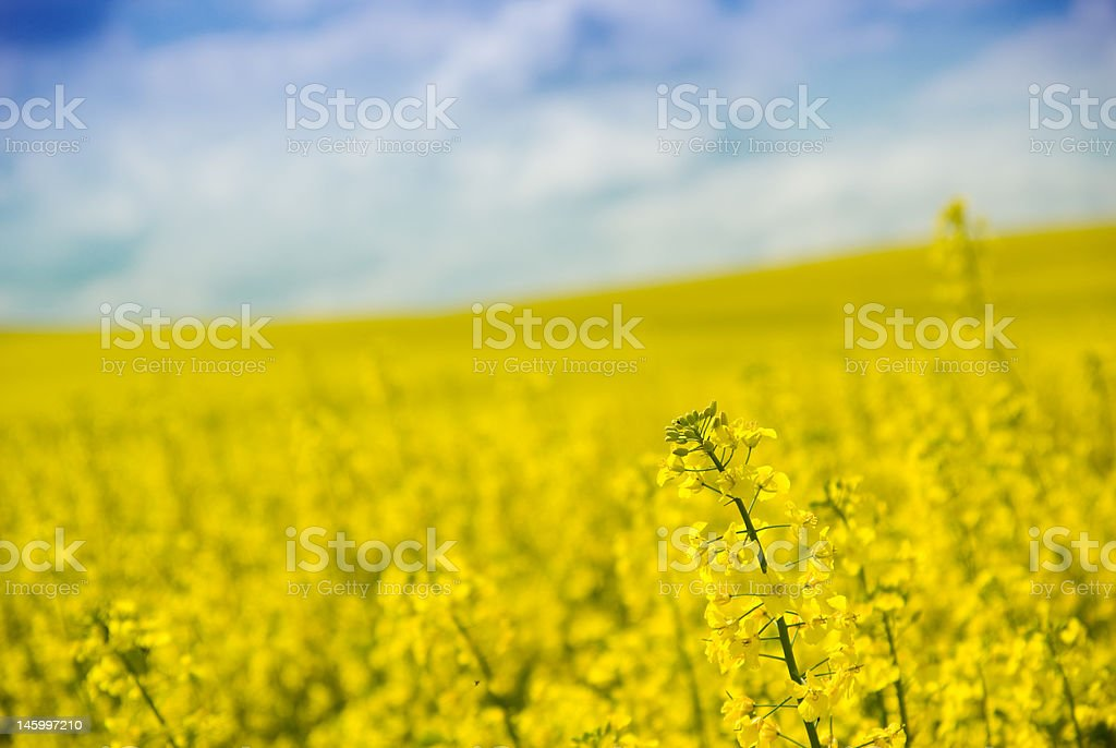 Farm field with blurred background. royalty-free stock photo