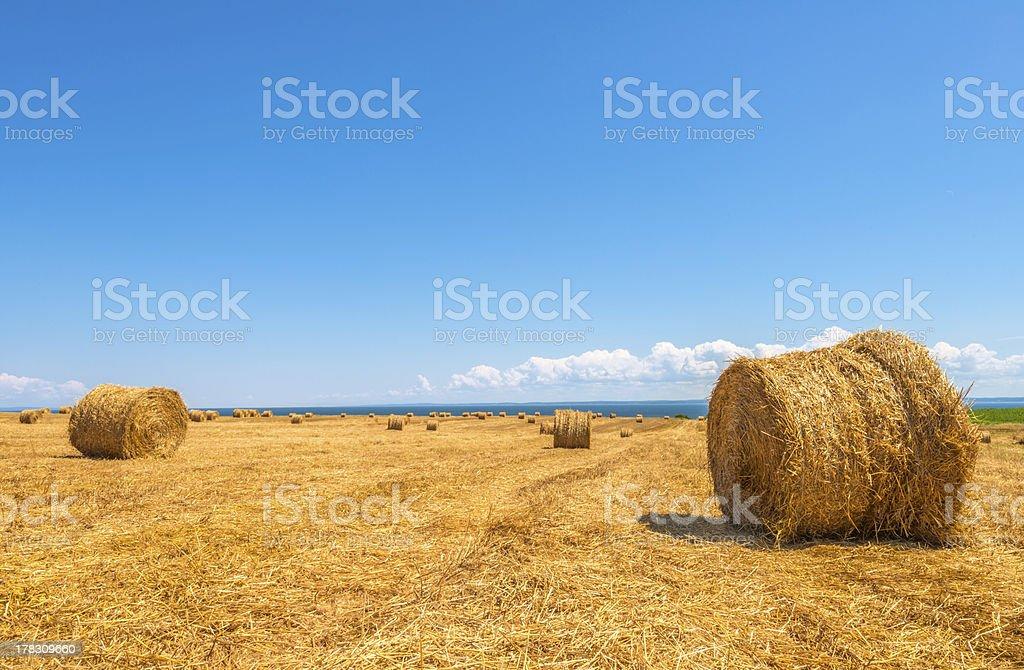 Farm field with hay bales royalty-free stock photo