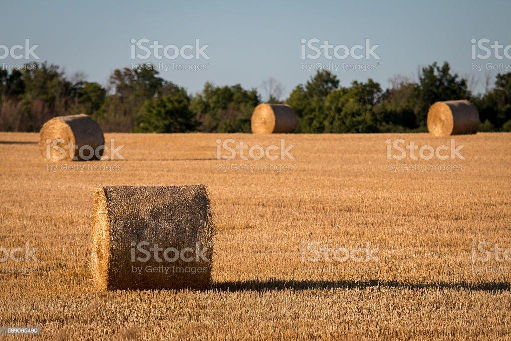 Farm Field with Hey Bales stock photo