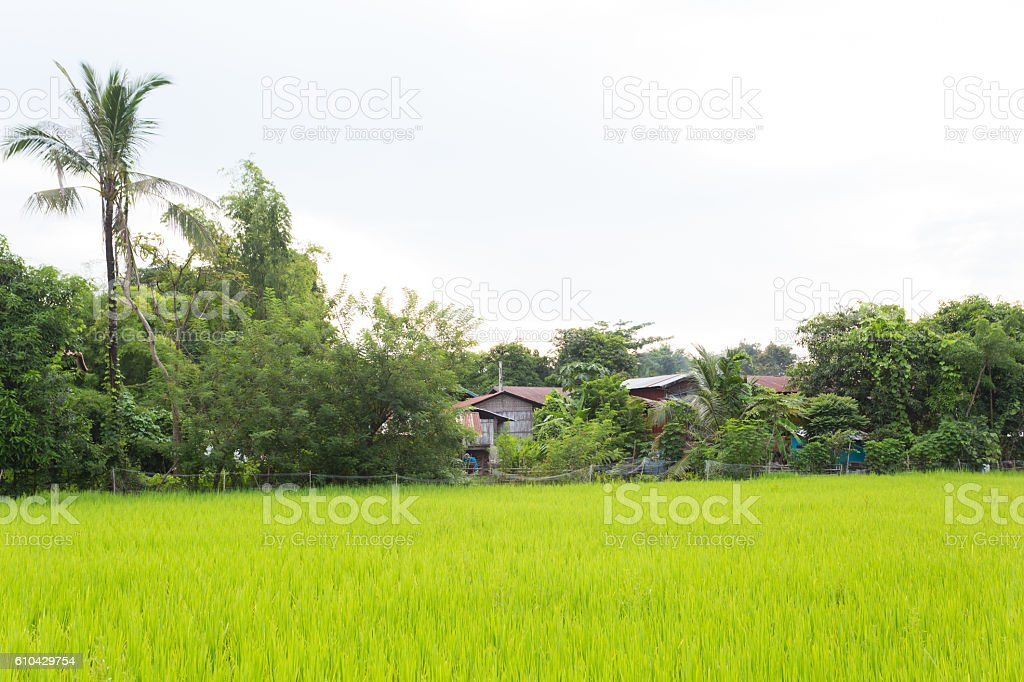 farm field with lao traditional house on the countryside stock photo