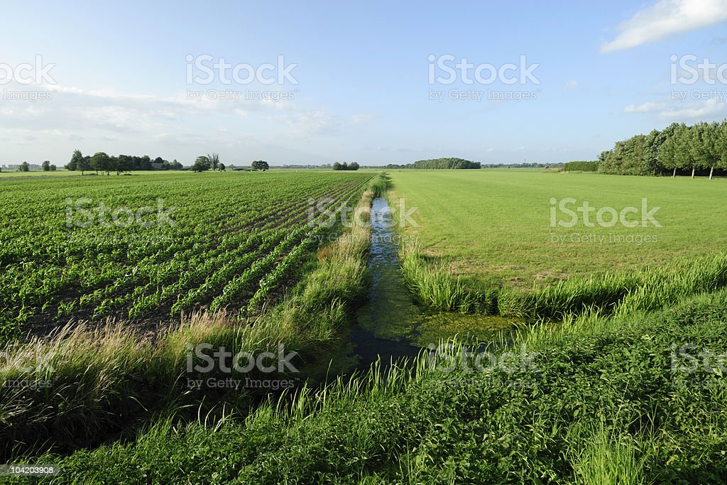 Farm fields in summer royalty-free stock photo