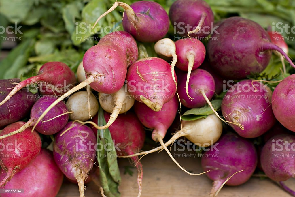Farm fresh bunch of radishes and beets. royalty-free stock photo