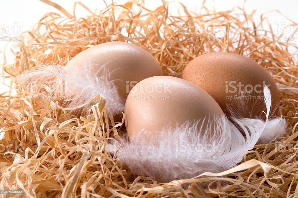 Farm huevos frescos. Orgánico. foto de stock libre de derechos