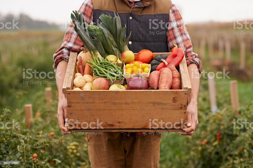 Farm fresh veggies! stock photo