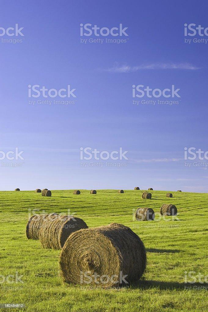 Farm hay bales stock photo