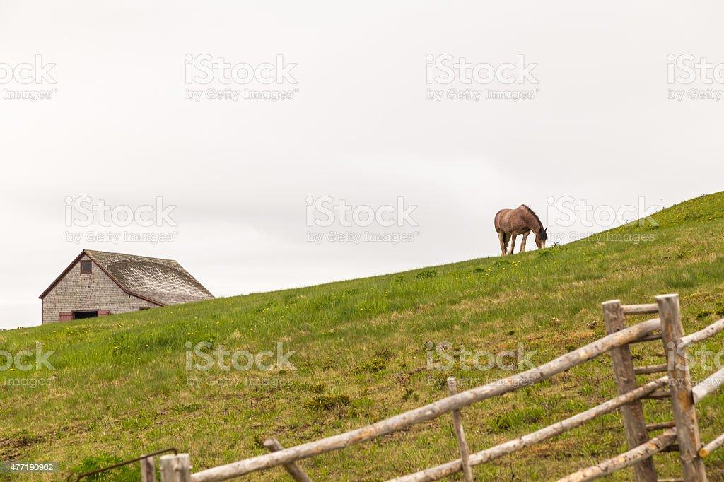 Farm Horse Grazing stock photo