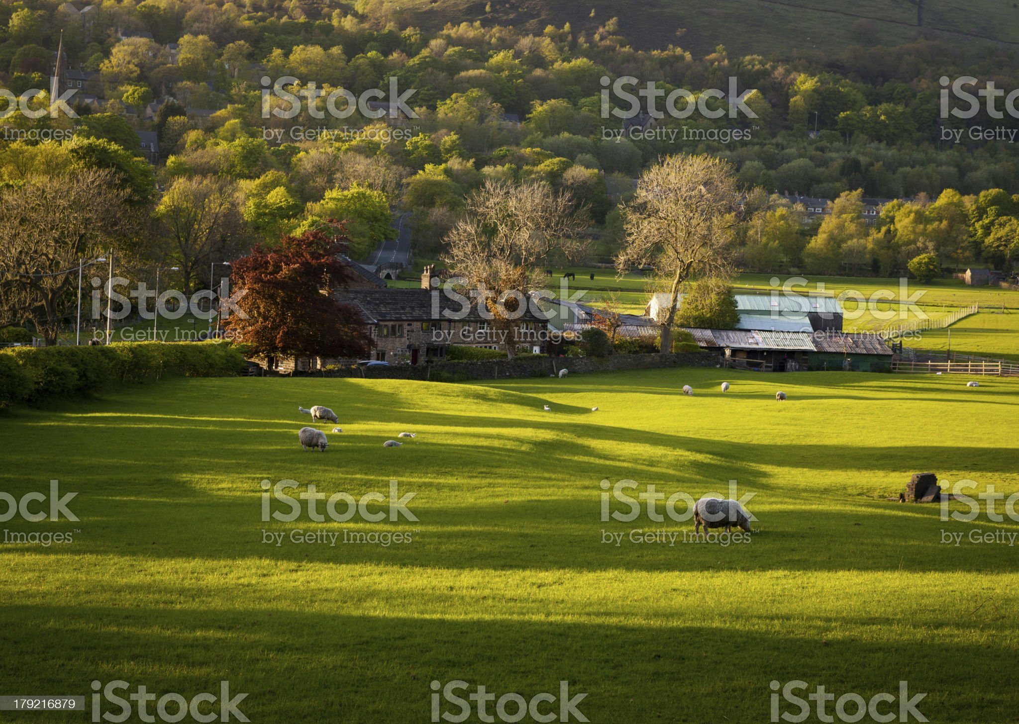 farm house grazing sheep royalty-free stock photo