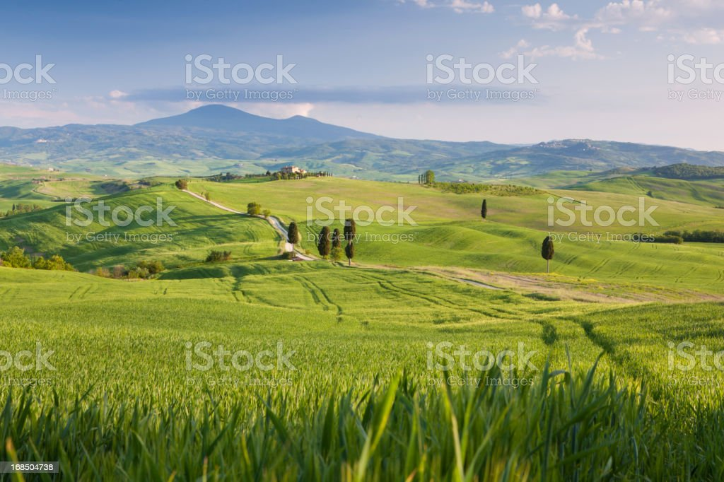 farm house in tuscany, italy wih reed field forground royalty-free stock photo