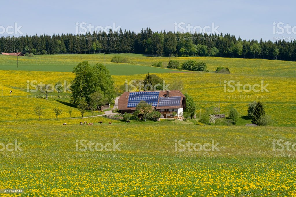 farm in dandelion meadow royalty-free stock photo